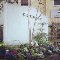 ガーデニング 藤枝 hiyori お庭