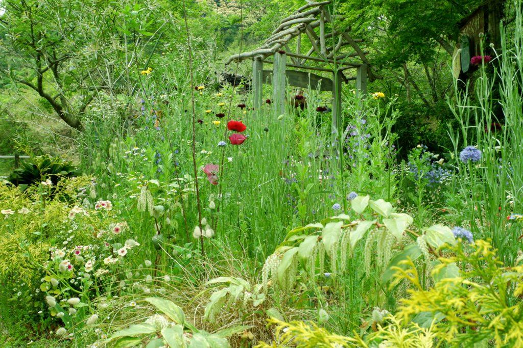 藤枝 静岡 hiyori ゆるびく村 ガーデン オープンガーデン お庭